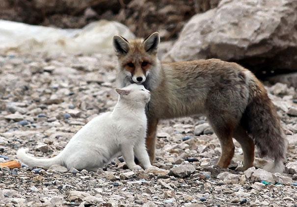 http://art-sheep.com/wp-content/uploads/2014/10/unusual-animal-friendship-7-3.jpg