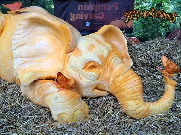 This Mive 900lb Pumpkin Carving At The Bronx Zoo Was Designed And Carved By Sculpt Usa To Help Bring Attention Organization 96 Elephants