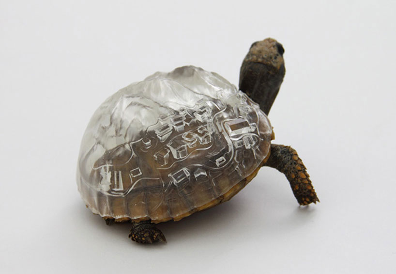 Hermit Crabs And The CitiesThey Found A D Printed Home ArtSheep - Tortoise gets 3d printed shell