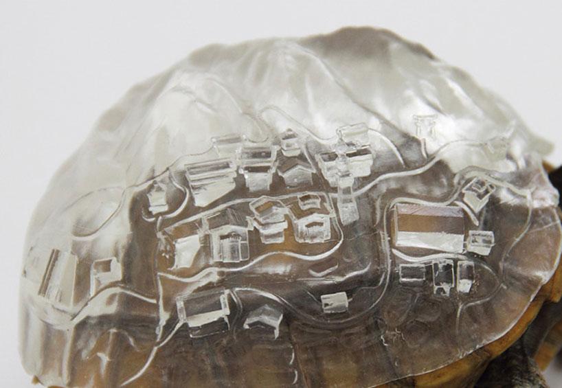 aki-inomata-hermit-crab-shells-designboom-02