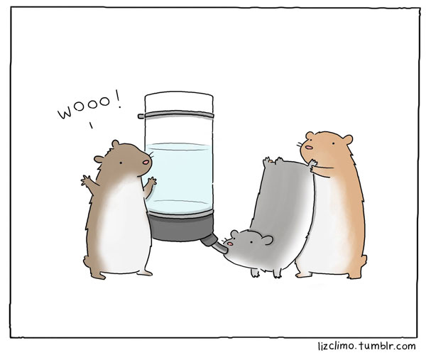 funny-animal-comics-by-liz-climo-1