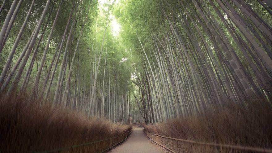 Silence Arashiyama (Kyoto)