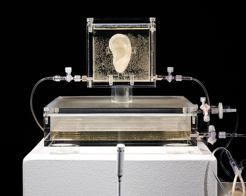 artist-has-grown-van-goghs-ear-with-DNA-and-a-3D-printer-designboom-02