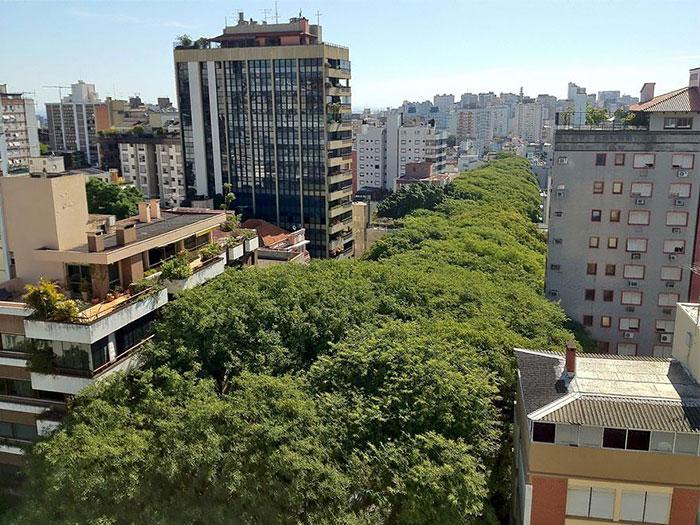 beautiful-streets-trellis-canopies-3-1__700