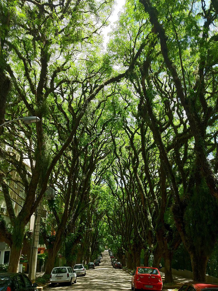 beautiful-streets-trellis-canopies-3-21