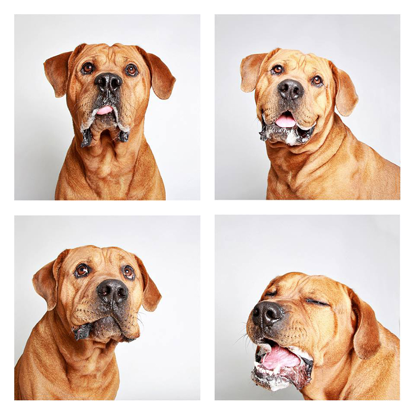 guinnevere-shuster-dogs-in-a-photo-booth-humane-society-_003