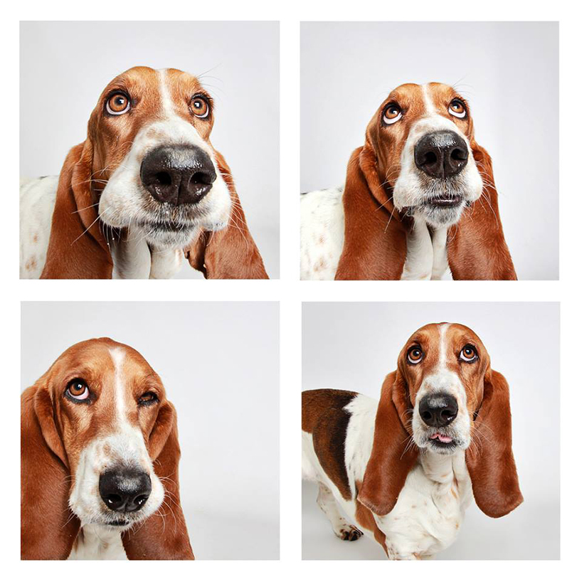 guinnevere-shuster-dogs-in-a-photo-booth-humane-society-_005
