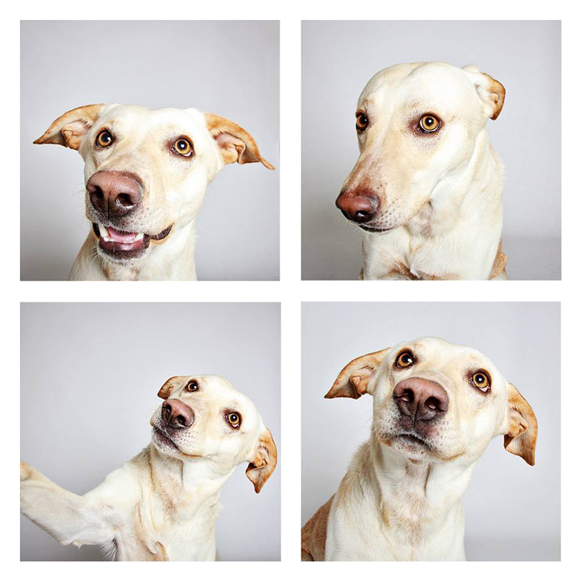 guinnevere-shuster-dogs-in-a-photo-booth-humane-society-_008