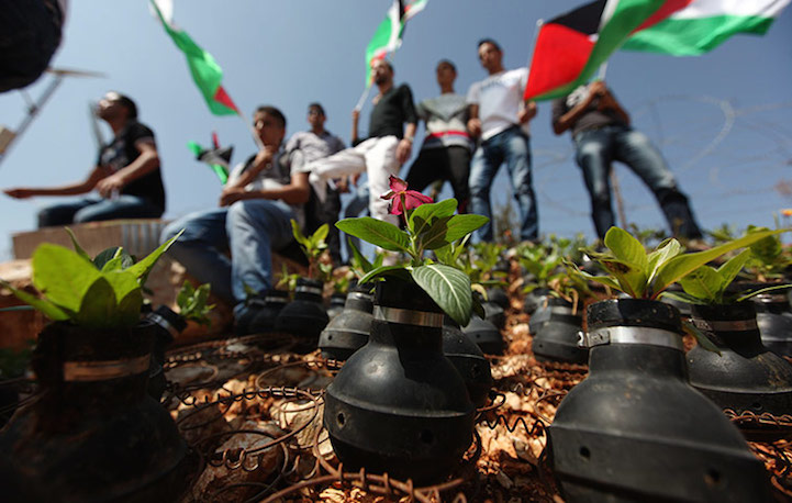 Palestinian activists stand near roses planted in used tear gas canisters