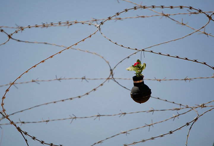 Flower on razor wire