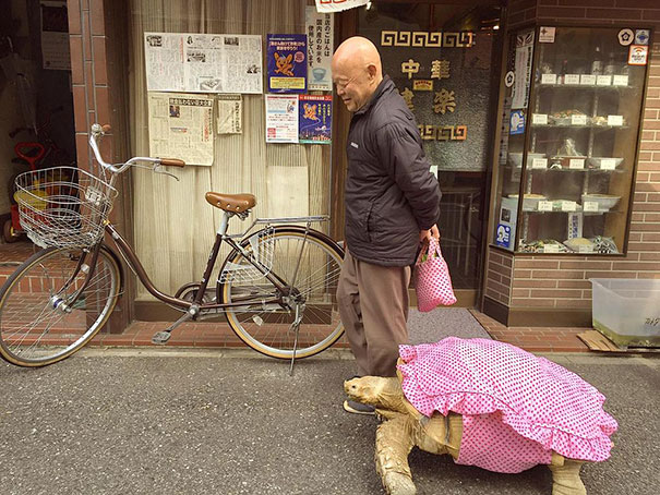 This Man Walks His Enormous Tortoise Through The Streets Of Tokyo - Man walks pet tortoise through tokyo