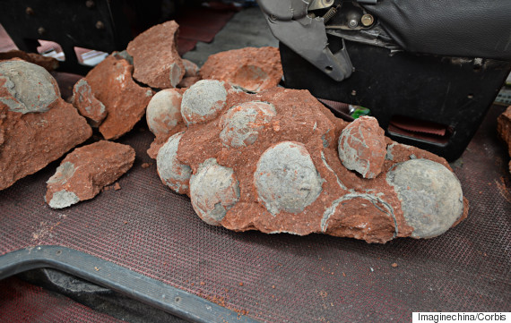 Dinosaur egg fossils found during road works in southern China