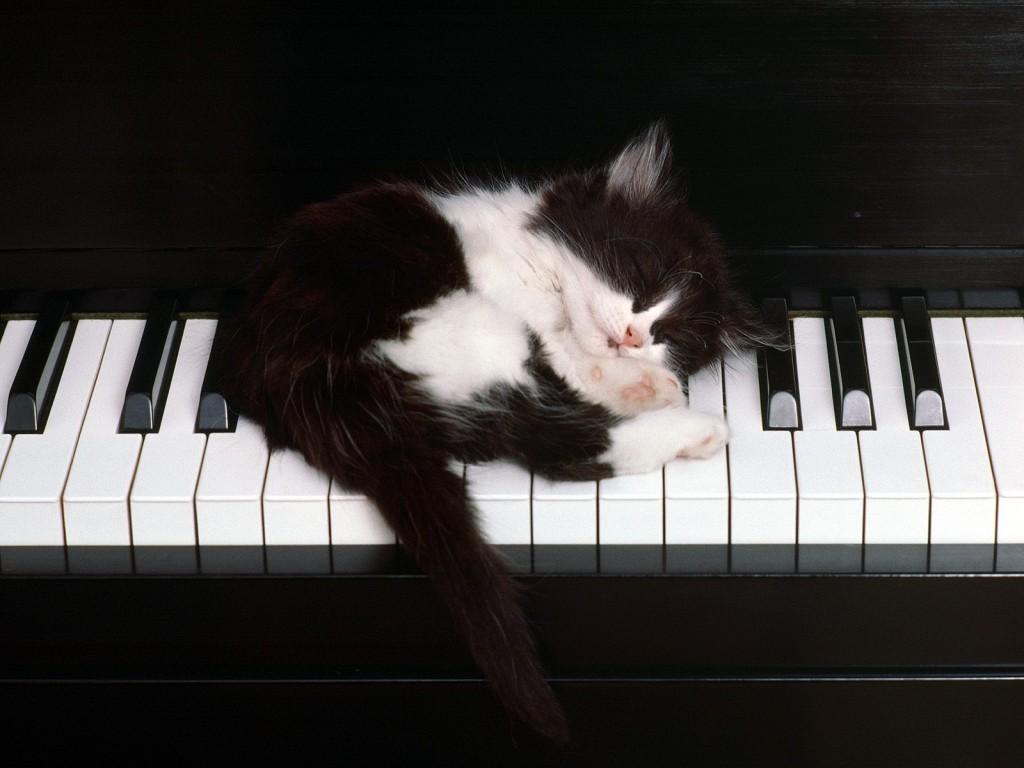 piano-mac-cats-love-music-animals-play-at-hd-background-255200