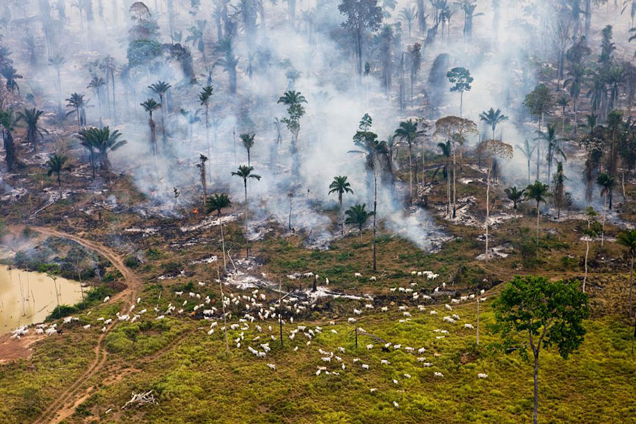 "Amazonian jungle in Brazil, burned to the ground for ""repurposing""."