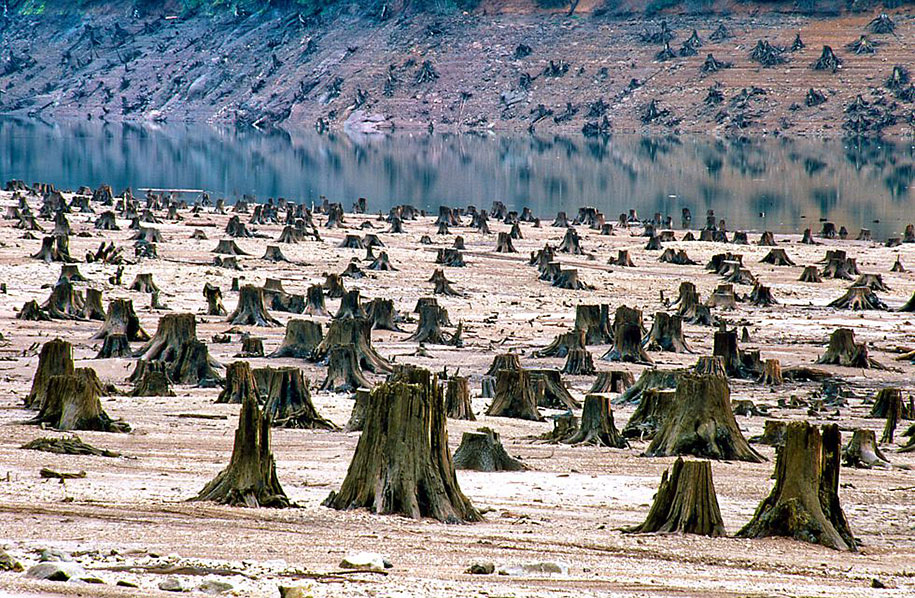 99% of Willamet's national forest in Oregon, U.S.A. is now deforested.