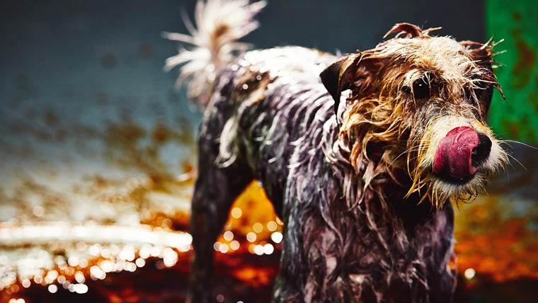 Canismo-wet-dog-painting-1