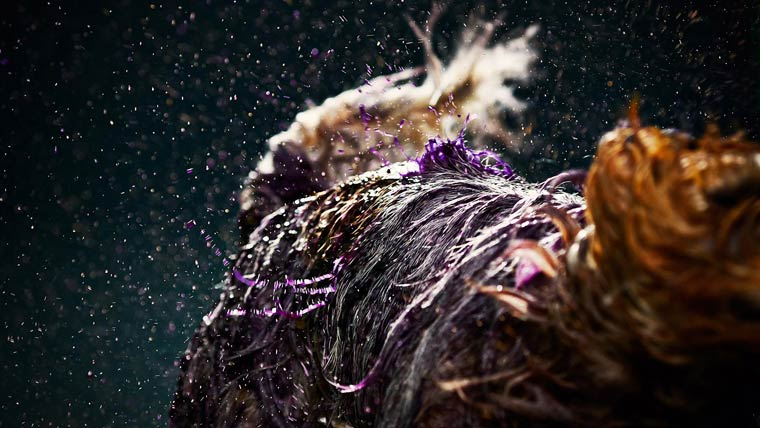 Canismo-wet-dog-painting-2