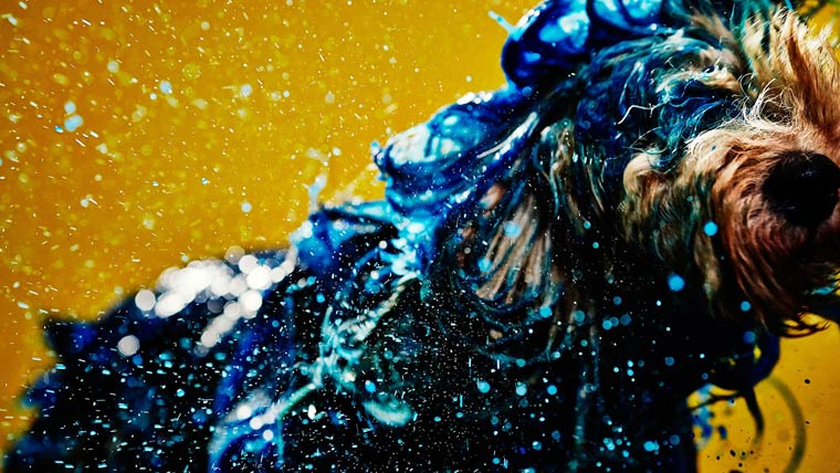 Canismo-wet-dog-painting-5
