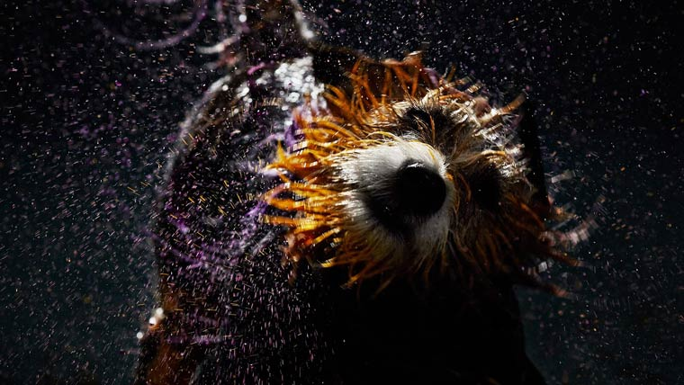 Canismo-wet-dog-painting-6
