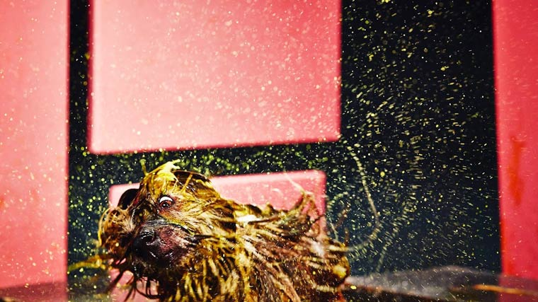 Canismo-wet-dog-painting-8