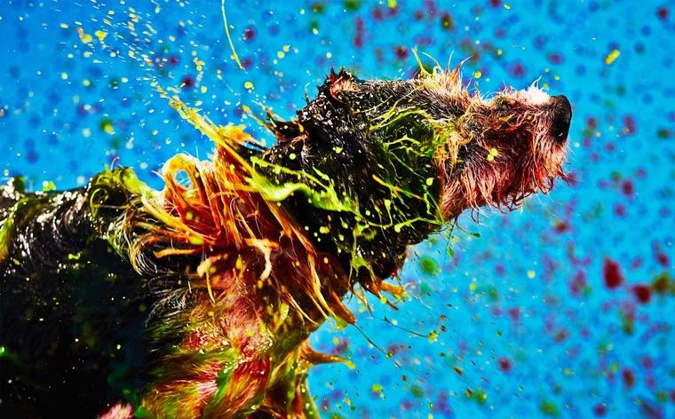 Colorful Acrylic Dog Paintings