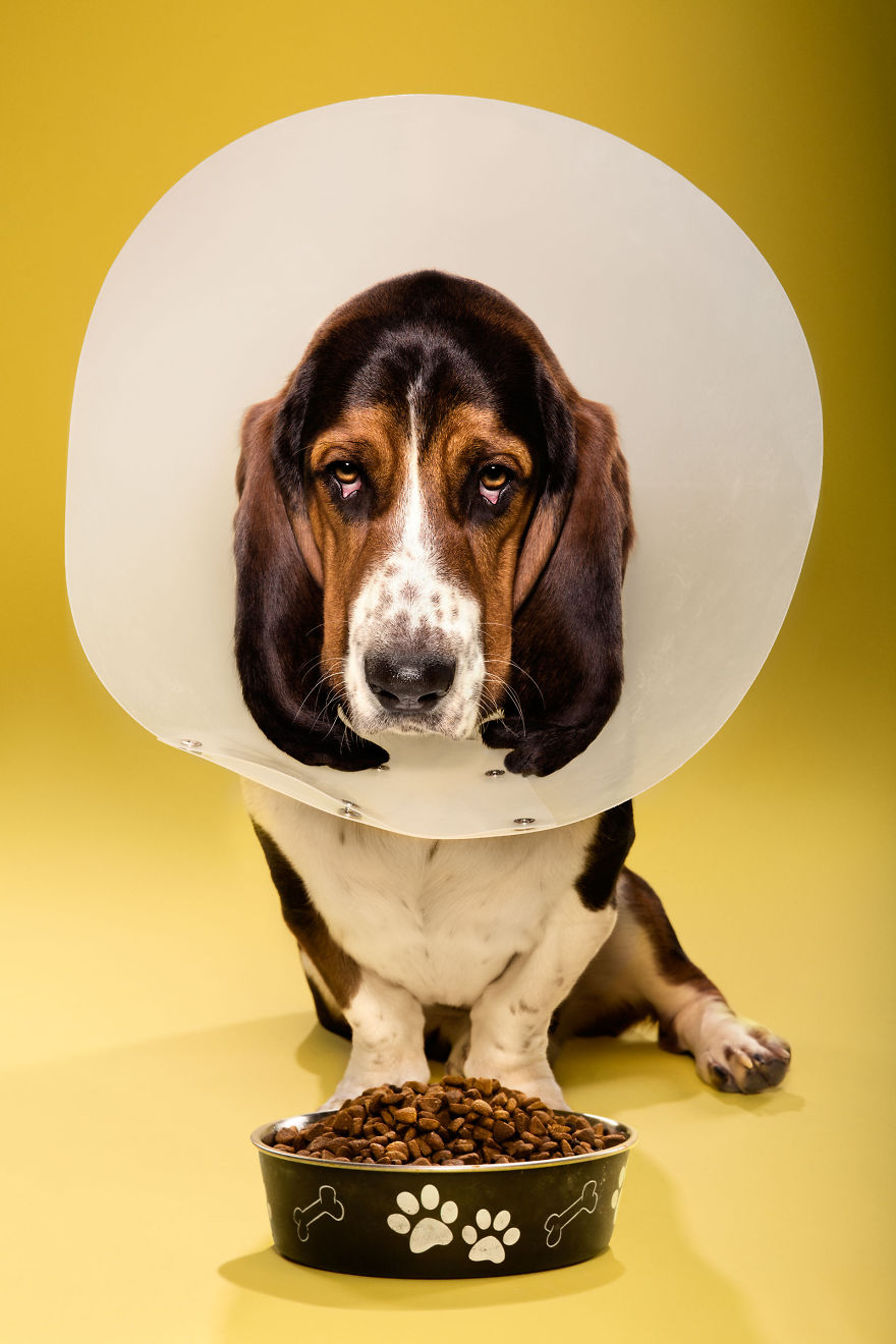Timeout-Cone-of-shame-portrait-series13__880