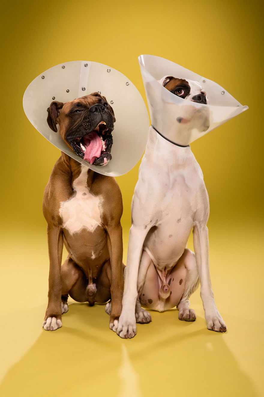 Timeout-Cone-of-shame-portrait-series14__880