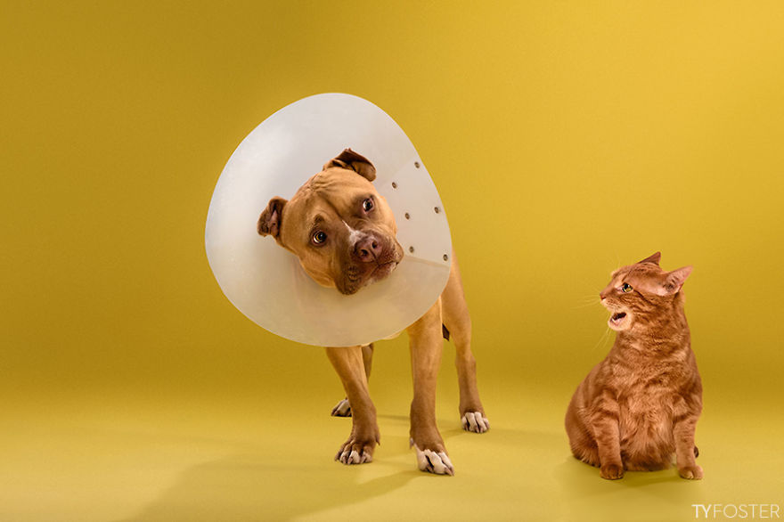 Timeout-Cone-of-shame-portrait-series2__880