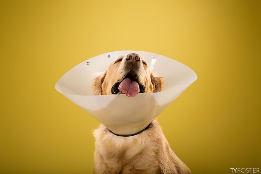 Timeout-Cone-of-shame-portrait-series5__880