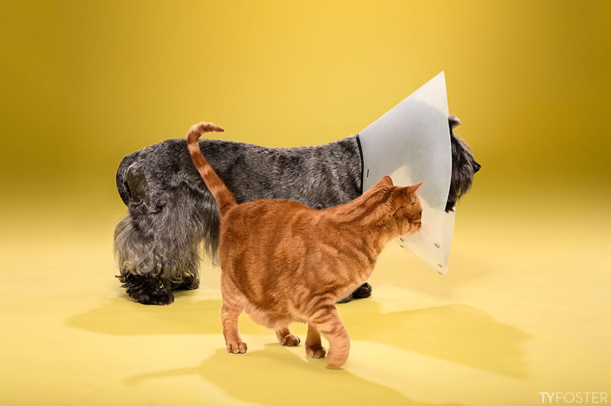 The Ultimate DogShaming Ty Fosters Photographs Dogs Wearing The - Dog portrait photography shows how they hate wearing the cone of shame