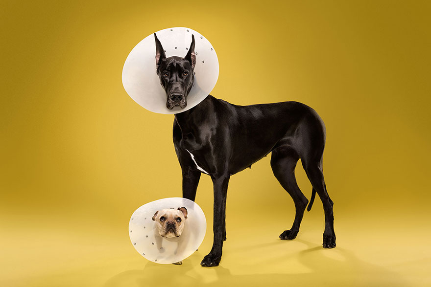 animal-portraits-pet-cone-timeout-ty-foster-2