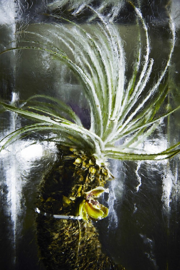 ICED-FLOWERS-10