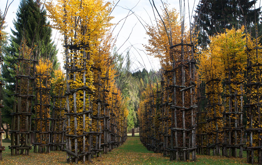 tree-cathedral-cattedrale-vegetale-giuliano-mauri-20