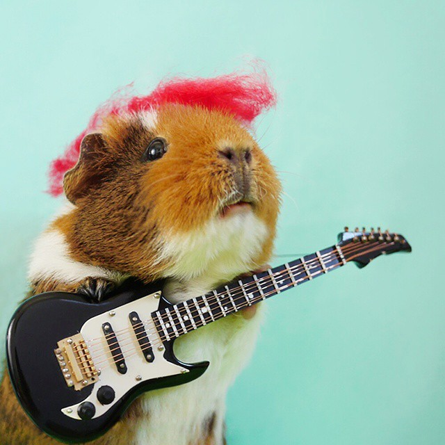 cute-hamster-costumes-fuzzberta-instagram-15