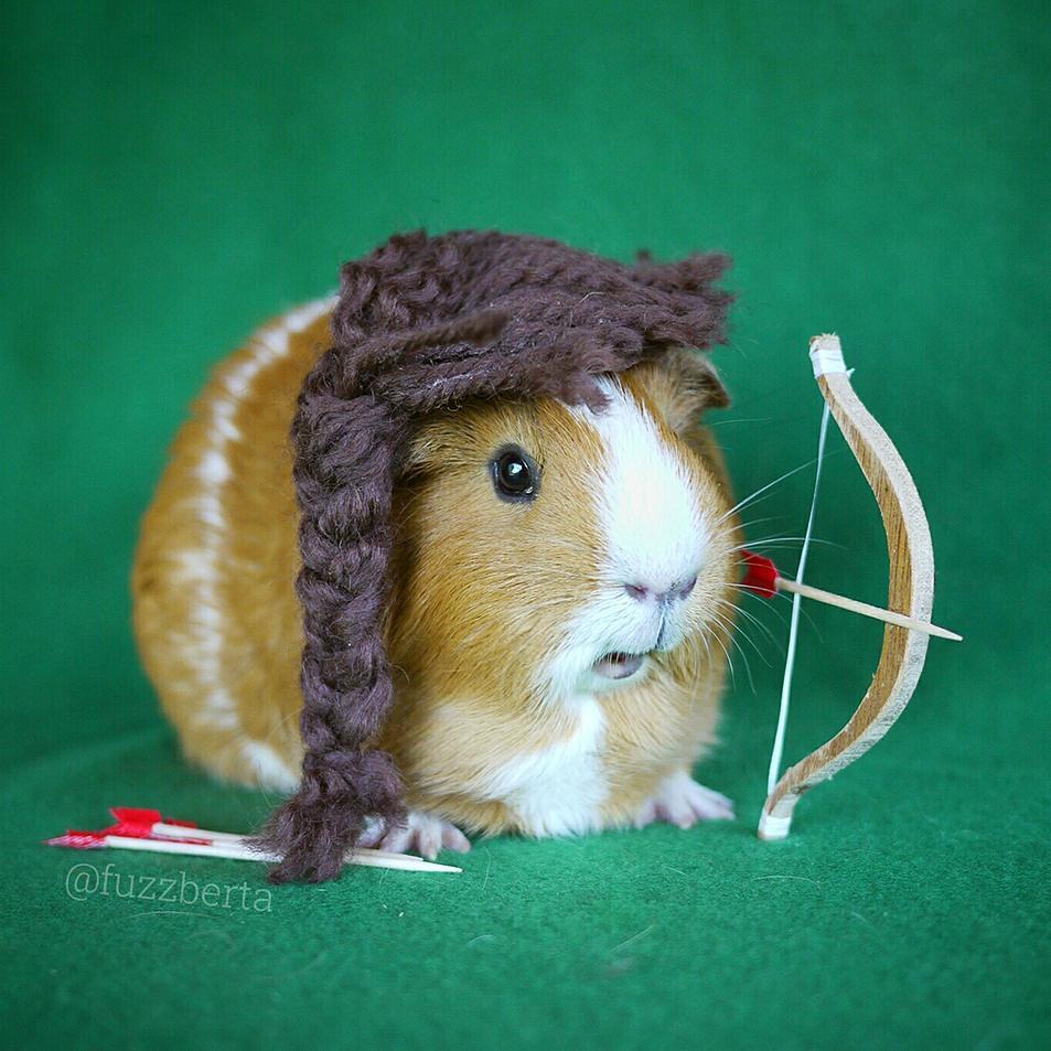 cute-hamster-costumes-fuzzberta-instagram-2