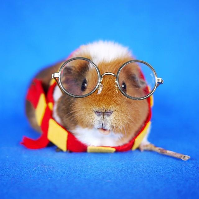 cute-hamster-costumes-fuzzberta-instagram-3