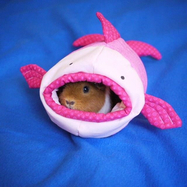 cute-hamster-costumes-fuzzberta-instagram-9