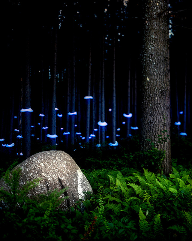Artist creates landscape light installations and captures them in a light 11 aloadofball Gallery