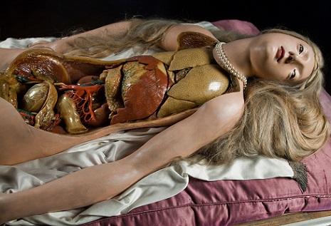 anatomicalvenus1odsbngboas2