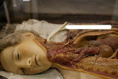 anatomicalvenus5opnedgp
