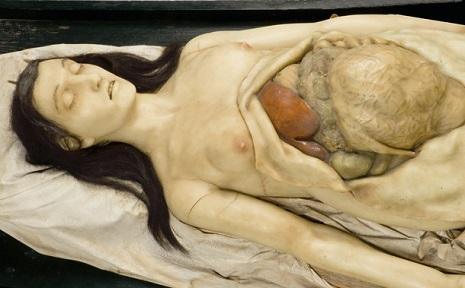anatomicalvenus8pasndflas