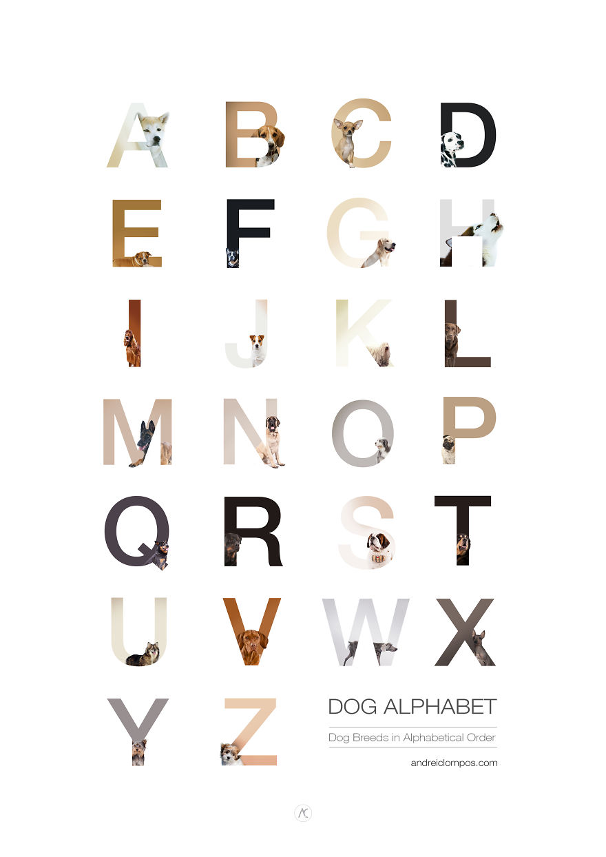 dog-alphabet-i-illustrated-dog-breeds-in-alphabetical-order-27__880