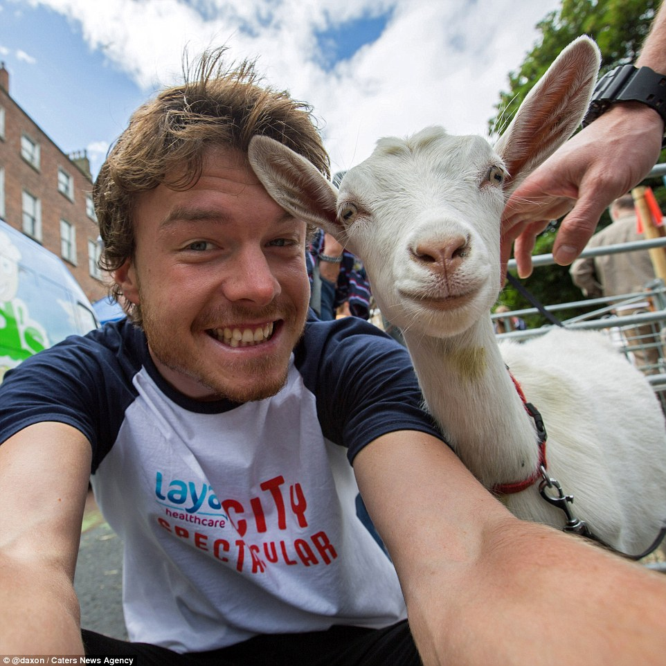 2F9119E100000578-3370281-A_white_goat_gazes_at_the_Irish_pho