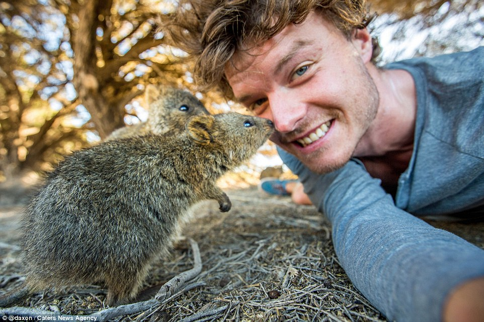 2F911B4200000578-3370281-Cautious_Two_tiny_quokkas_look_unsu