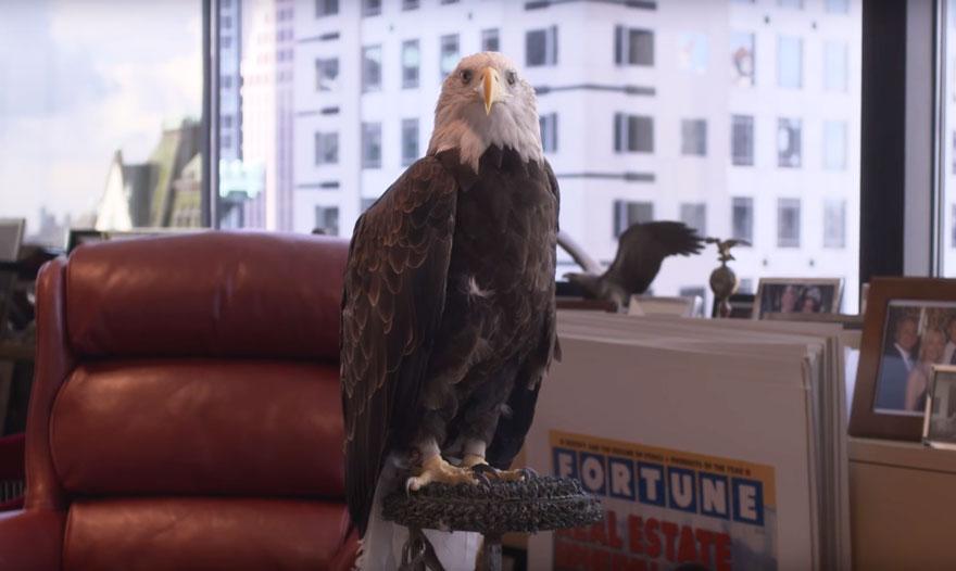 bald-eagle-attacks-trump-photo-shoot-time-magazine-5