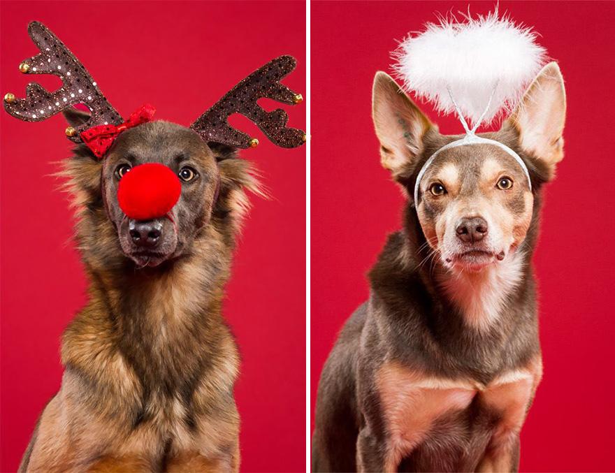 i-took-christmas-themed-dog-portraits-to-wish-you-happy-holidays-2__880