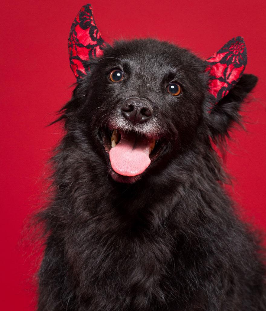 i-took-christmas-themed-dog-portraits-to-wish-you-happy-holidays-8__880