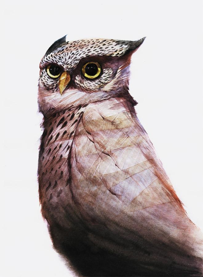 ornitology-failed