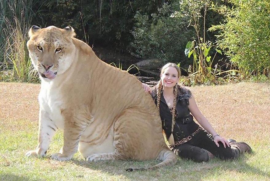 unusual-hybrid-animals-1-1
