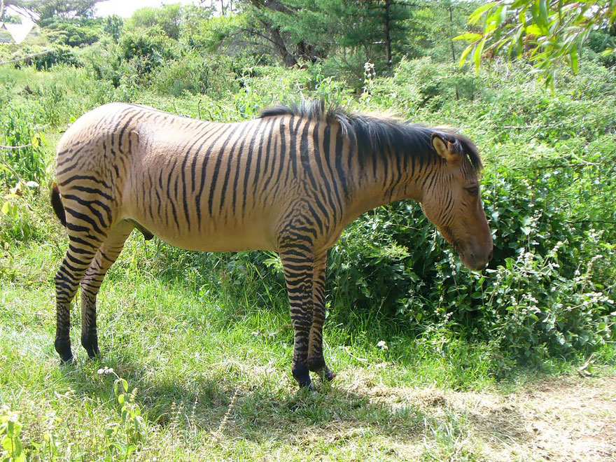unusual-hybrid-animals-31